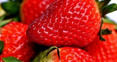 Erdbeersäule selbst bauen