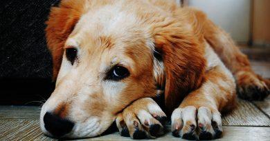 Hundemarke selbst basteln