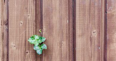 Diese Unterschiede sollten Heimwerker über Holzleim kennen