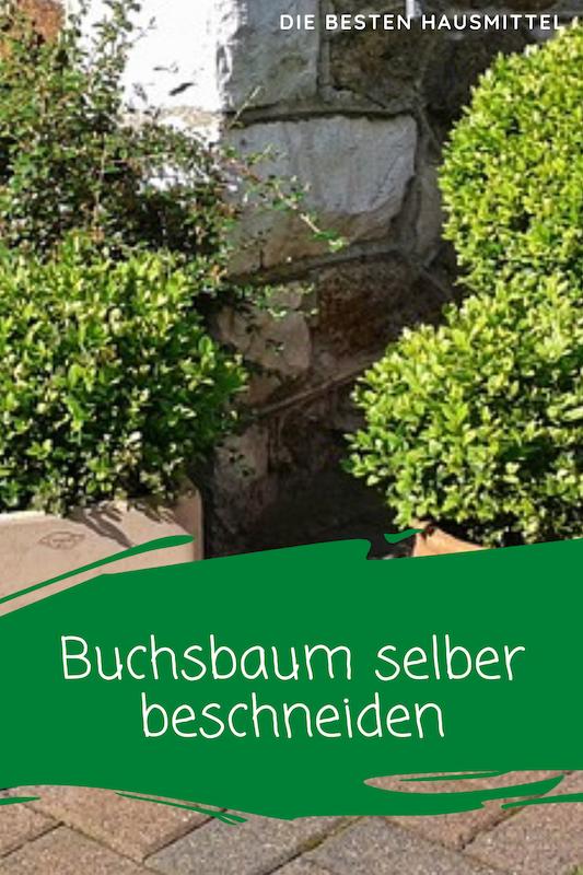 Buchsbaum selber beschneiden